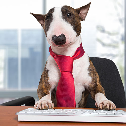 Dog manager typing on a computer keyboard in his office